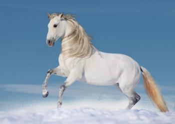 Pranostika sv. Martina na bílém koni - co nás čeká letošní zimu a příští rok?