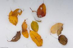 Sněhové čarování na zahradě - fotogalerie