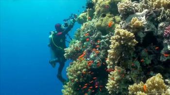Dovolená u moře - nejlepší potápěčské lokality na světě