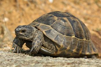 Želva suchozemská-začínáme s chovem