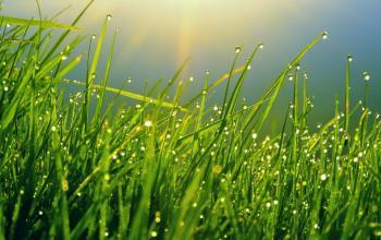 Rady při obnovování trávníku