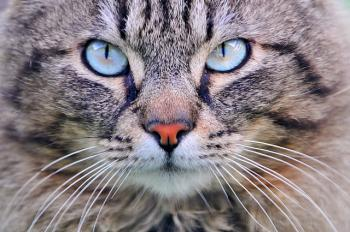 Kočka – než si pořídíte kočku
