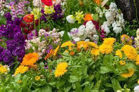 Jarní květiny - co vysázet do truhlíků časně na jaře?