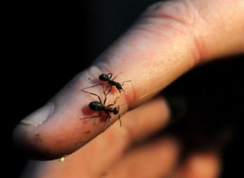 Hubení mravenců - jak na to