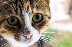 Vánoce jsou i pro kočičky v útulcích